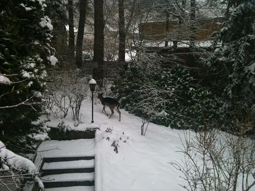 Waldnestle Carlsberg winterlicher Garten